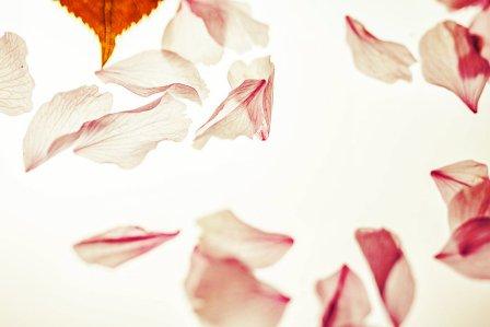 petals-2232267_960_720