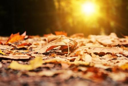autumn-2874547_960_720