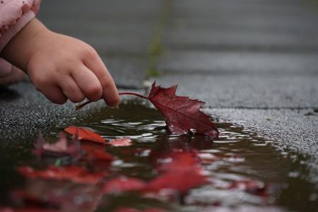 autumn-2917472_960_720