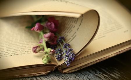 book-2363881_960_720 (7)