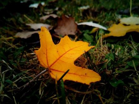 leaves-1051633_960_720