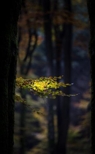 autumn-2854220_960_720