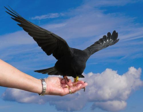 bird-3316351_960_720
