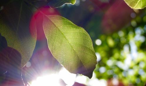 leaf-1209899_960_720