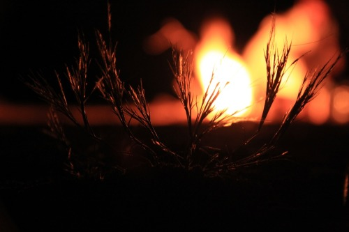 fire-971949_1280.jpg