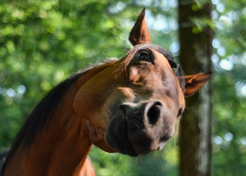 horse-3555391_1280