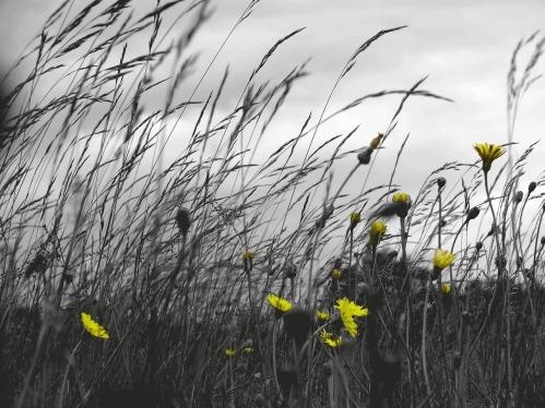 grass-354737_1280