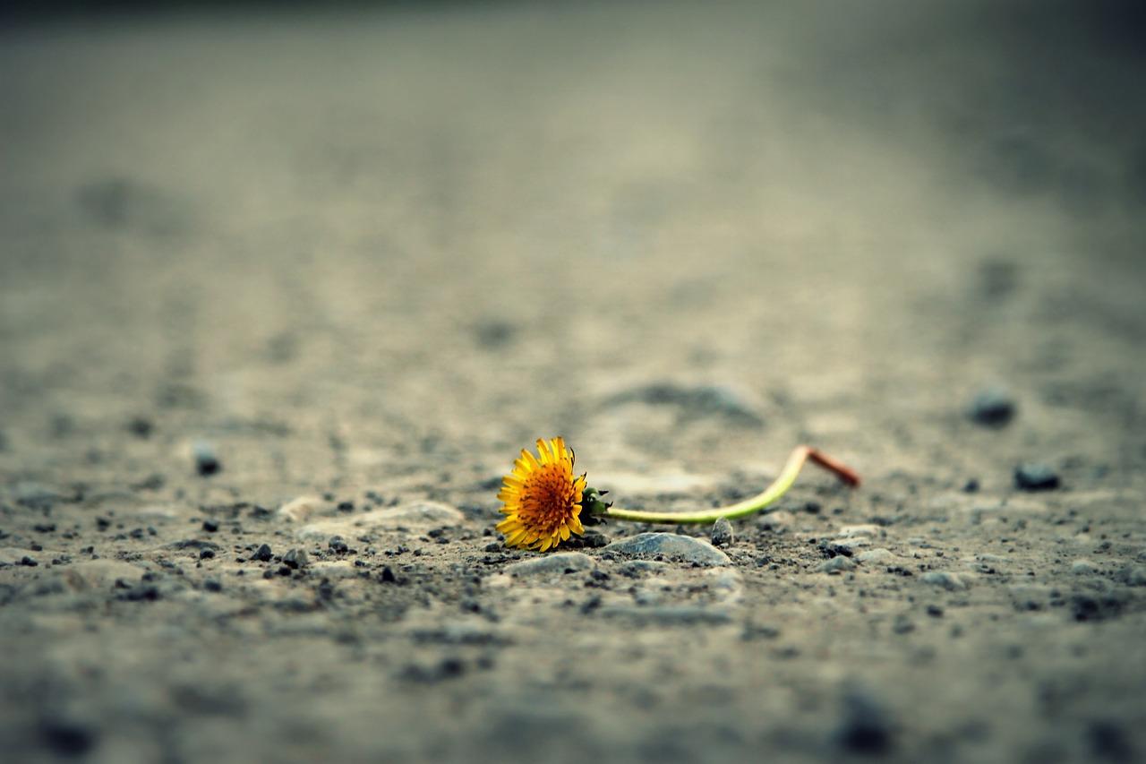 flower-1812470_1280