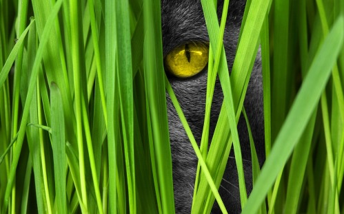 cat-1367000_1280