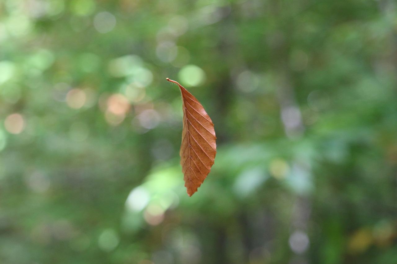 suspended-leaf-3166771_1280