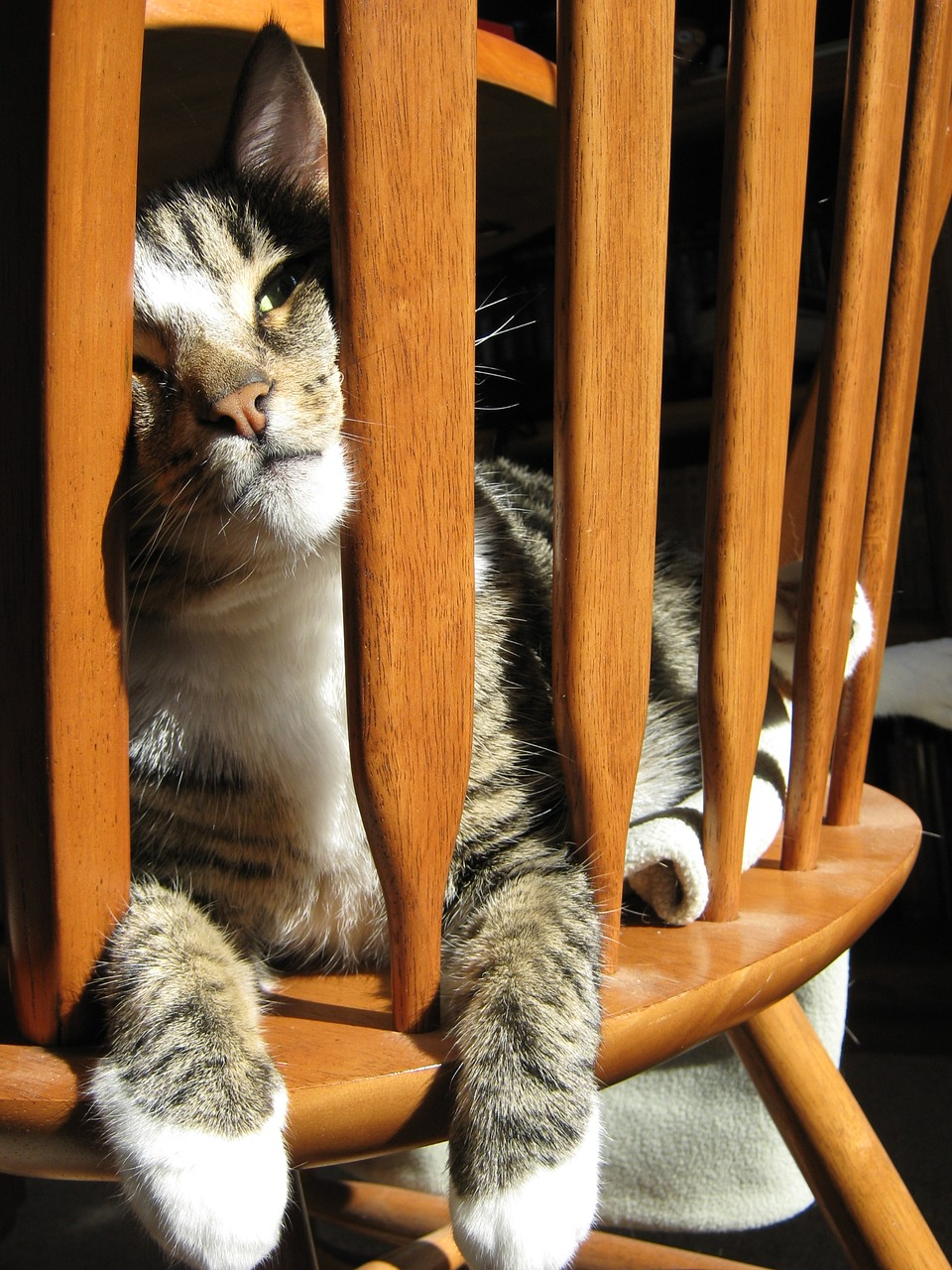 cat-1819447_1280 (1)