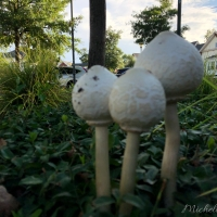 Marveling over mushrooms